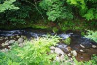渓流を眺める