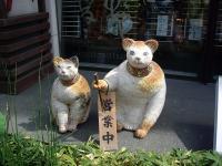 2匹になったお箸屋の猫さん