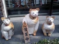3匹トリオにもどった猫さん