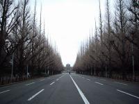 絵画館前のイチョウ並木